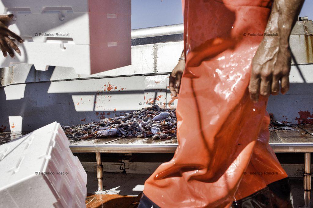 Taranto, Italy, September 19, 2013. Fishing in the gulf of Taranto. Most of the fishemen use an illegal small net in order to catch more fish in this period of crisis. ### Taranto, Italia, 19 Settembre 2013. Battuta di pesca a strascico nel golfo di Taranto. Molti pescatori usano una rete con maglie pi piccole del consentito per prendere pi pesce in questo periodo di crisi.
